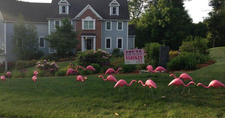 Flamingos are Back in Hopkinton