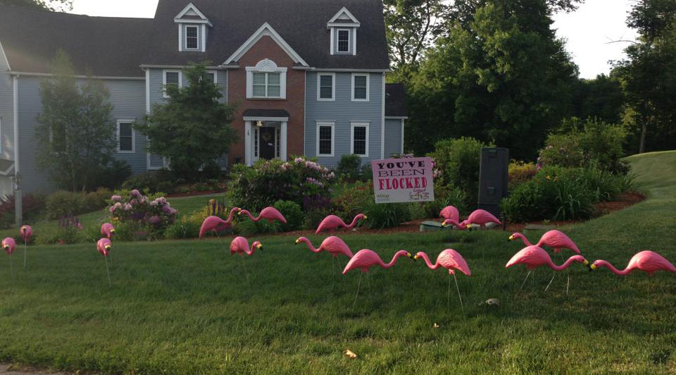 Flamingos are Back in Hopkinton